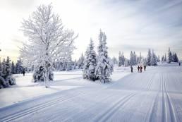 Skispor langrenn